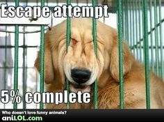 :) this looks just like my Roxy when she is wanting out of her crate!!! Lol