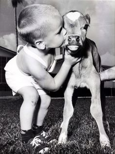 A boy and his calf....  1954.  I love his skinned knee :-)--can't read calf's poker face
