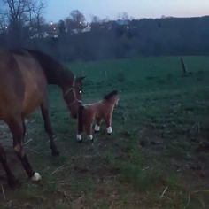 http://ift.tt/2ulzwA8 You are Fake Horse