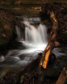 """Sam Calhoun on Instagram: """"A small cascade downstream of that last falls a ways.  Even the small falls are so picturesque.  Bankhead National Forest, AL.  #explore…"""""""