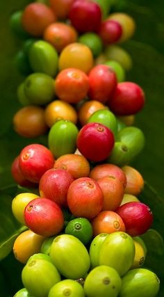 Nyc Coffee Shop, Coffee Cafe, Espresso Coffee, Coffee Drinks, Starbucks Coffee, Street Coffee, Coffee Icon, Coffee Plant, Coffee Pods
