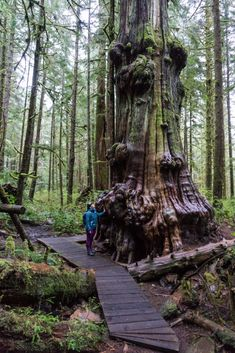An ancient cedar in Avatar Grove near Port Renfrew, BC. Be sure to check out the big trees along the Pacific Marine Circle Route. Victoria Vancouver Island, Old Trees, Welcome To The Jungle, Big Tree, Road Trippin, Canada Travel, Weekend Getaways, British Columbia, Vacation Spots