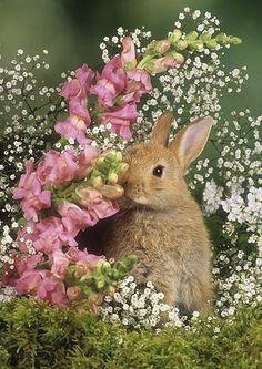☆Bunny in Spring Flowers Cute Baby Bunnies, Cute Baby Animals, Animals And Pets, Funny Animals, Cute Babies, Cute Bunny Pictures, Fluffy Bunny, Spring Flowers, Animals Beautiful