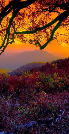 Our Blue Ridge mountains Golden Beauty of a sunset over flowered fields across the Mountains! Enough to steal your Hearts eyes for a special moment in time.
