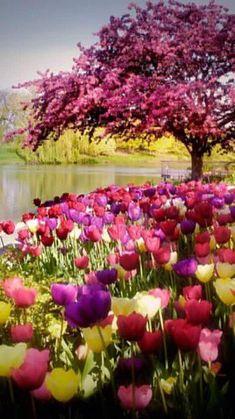 Garden Images, Garden Pictures, Garden Photos, Nature Pictures, Beautiful Pictures, Beautiful Flowers Garden, Flowers Nature, Amazing Flowers, Beautiful Gardens