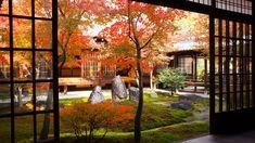 ガラス戸越しの潮音庭 Japanese Garden Style, Colored Leaves, Garden Styles, Japan Travel, Kyoto, Autumn Leaves, Gardens, Asian, Beautiful