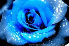 Blue Roses   Blue Rose. by PeriwinkleEyes on deviantART