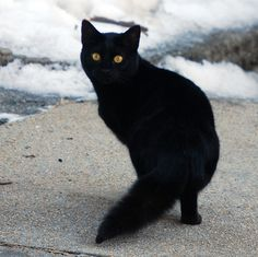 Gorgeous black cat!!!! I agree too. Incensewoman