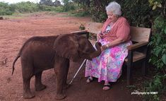 MOURNING THE DEATH OF CONSERVATION TRAILBLAZER : Daphne Sheldrick leaves behind an extraordinary legacy for wildlife and women in conservation. A trailblazer, mentor to many, and an enthusiastic wildlife conservationist, Daphne championed the protection of the elephant and other endangered species. Through the David Sheldrick Wildlife Trust (DSWT), which she founded in 1977, she helped shape the world's understanding of elephants and rhinos.