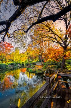 Japanese Gardens Pond, Texas,USA, photo by dfikar.