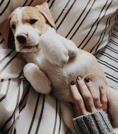 ❤️ Les papouilles sur le ventre c'est la vie !!!!  ________________________________________________________ #nana #babydog #beagle #love #socute #instapic #latelierderoxane #teamgourmandise #jevousaime Beagle, Animals And Pets, Cute Animals, Photo S, Youtubers, Labrador Retriever, Puppies, Forever, Dogs