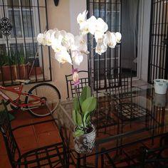 #InstagramELE | #planta | Hay muchos tipos de plantas pero las orquídeas son unas de las más bonitas. Foto de @laurajc_99