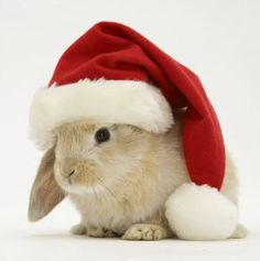 This is as close as you will get to a bunny for Christmas @Helen Katherine.