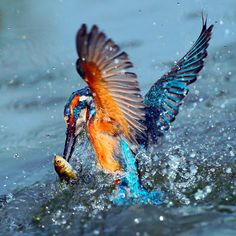 PRELUDE: Differentiate With Flying Colors...Via A Distinct Global Personal Brand...Passionately Propelled By A Singular Life Purpose...Like The Intense Singular Focus Of A Kingfisher.