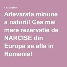 Adevarata minune a naturii! Cea mai mare rezervatie de NARCISE din Europa se afla in Romania!