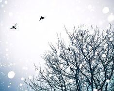 birds in flight birds flying photography winter by mylittlepixels