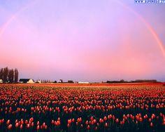 arcobaleni_7.jpg (1280×1024)