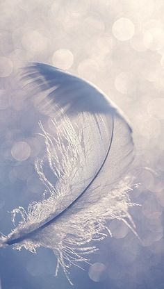 white feather in blue sky