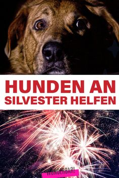 So beruhigst du Hund und Katze beim Silvester – Feuerwerk | Das Inspirations-Magazin Silvester Party, New Years Eve, Movie Posters, Organization, New Years Eve Fireworks, Clothes For Dogs, Calm Down, Film Poster, Popcorn Posters