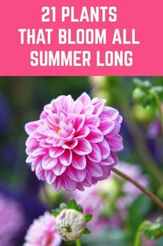 If you'd like a gorgeous display of color and beauty right through spring, summer and even in to fall, then here's what you should grow. # flower Gardening 21 Plants That Bloom All Summer Long Garden Yard Ideas, Easy Garden, Lawn And Garden, Garden Projects, Summer Garden, Indoor Garden, Garden Mum, Sun Garden, Balcony Garden