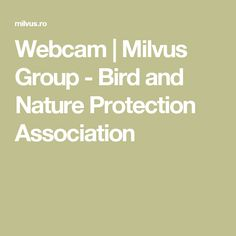 Webcam | Milvus Group - Bird and Nature Protection Association