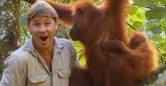 awesome Remembering Steve Irwin's Incredible Encounter with an Orangutan Mom and Her Baby