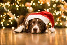 Winter Puppy Love      photography by: Hannah Meinhardt || Terka Brožková || Alicja Zmyslowska || Viktoria Haack || Anett Mirsberger || Anne Geier || Nataliya Mochalova || Julia Poker