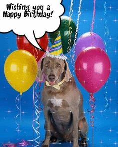 Happy birthday dog with balloons