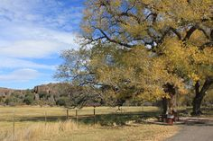 Giant cottonwoods give Fort Davis a colorful autumn. This roadside park is between Fort Davis and Alpine. Sometimes, non-native elk graze the pasture in the background. Fort Davis, West Texas, Le Far West, Painting Tips, Elk, Places To See, Country Roads, Colorful, Artists