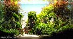 2006 AGA Aquascaping Contest - Entry #56