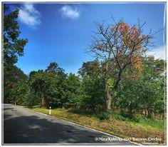 #way #nature #forest #bavorov #helfenburk #vylet #cestovani #retroturistika #turista #landscape #travel #trip #explore #czechia #visitCzechia #visitcz #2017 #today #myphoto