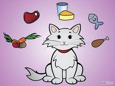 Cómo cocinar para #gatos / Cook for #Cats