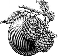 Stock Scratchboard Illustrations by Michael Halbert Engraving Art, Engraving Illustration, Illustration Art, Lino Art, Woodcut Art, Flower Drawing Tutorials, Stippling Art, Scratchboard Art, Human Drawing