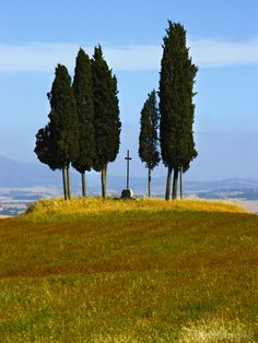 Tuscan Cypress Trees, San Quirico d'Orcia, Italy by Ketchum artist Marybeth Flower, province of Siena