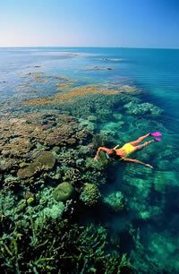 Explore The Great Barrier Reef Queensland, Australia Snorkeling Great Barrier Reef, Australie