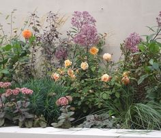 1960's London Townhouse. Raised beds filled with dahlia, eupatorium, roses, stipa gigantea and purple sedum. Garden Design by Imperfectinteriors.co.uk