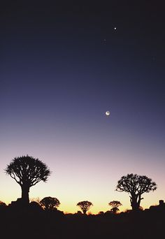 Quiver trees, Kakamas district, Northern Cape Province, South Africa; photo by Lanz von Horsten