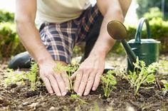 Сода — проверенное средство от муравьёв в огороде 6cotok.org/...