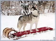 Beautiful...my dogs have taught me to enjoy winter :)