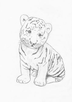 Images For > Easy Baby Tigers Drawings