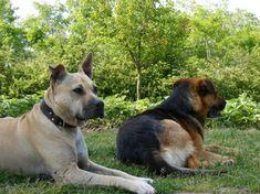 Kutyáknak/kutyákra mérgező növények - gazigazito.hu Humor, Dogs, Animals, Humour, Animais, Cheer, Animales, Animaux, Doggies