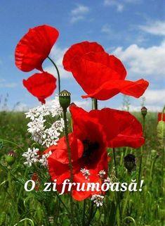 Beautiful Rose Flowers, Flowers Nature, Amazing Flowers, Beautiful Gardens, Wild Flowers, Beautiful Flowers, Valley Of Flowers, Corporate Flowers, Good Morning Flowers