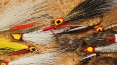 Google Image Result for http://ak7.picdn.net/shutterstock/videos/2407541/preview/stock-footage-fly-fishing-trout-lures.jpg
