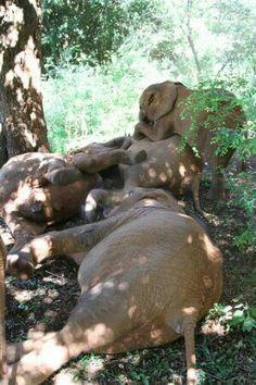 Guardería para Elefantes