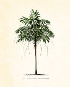Antique French Palm Tree Plate 2 Botanical 1878 8 x 10 Art Print Wall Decor