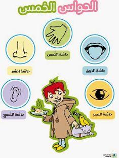 الحواس الخمس ,تعليم الأطفال الحواس الخمس ,حاسة الشم ,حاسة الذوق, حاسة اللمس, حاسة السمع ,حاسة البصر
