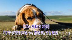 【1分涙腺崩壊】「オヤジだけになつく変な犬、でも実は・・・」【犬の感動する話】  昔、うちで飼ってた犬は元捨て犬で、意地っ張りだった。 いい加減大きくなってから飼い始めたこともあってか、 それとも人間不信からか、しばらくの間は俺たちに対しても唸り続けていた。 俺たちがエサをやろうとすると、時折歯を見せて威嚇することもある。   ☆☆☆☆☆☆ 涙腺崩壊-1分で感動!では、 泣ける話、感動する話を 厳選して配信しています。   音と画像で心震える感動を…。  チャンネル登録すると 新しい動画がスグに見れます☆ ▼▼▼ http://www.youtube.com/subscription_center?add_user=namidaafureru