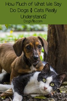 Dog Behavior Why is your dog humping your cat? Find out what makes them do it, whether it is normal dog behavior and how you can put a stop to it! Dachshund Quotes, Funny Dachshund, Dachshund Gifts, Dachshund Puppies, Weiner Dogs, Coconut Oil For Dogs, Dog Training Tips, Potty Training, Dog Behavior