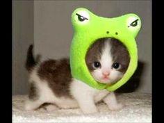 imagenes de gatitos - Buscar con Google