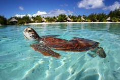 Polinesia - AmoilMondo